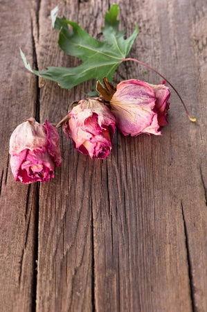Dry roses and maple leaf on old wooden background with copy space photo