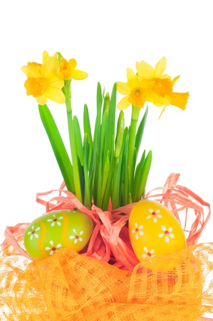 Easter eggs and spring yellow narcissus (daffodil) in flower pot with bright decoration isolated on white background photo