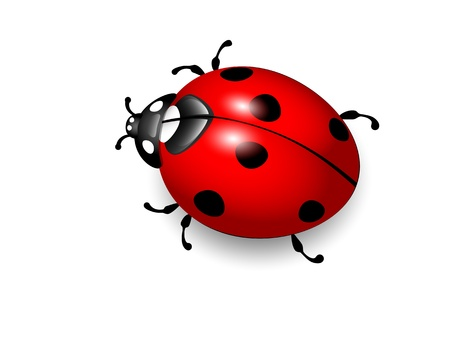ladybug: Ladybird  Vector illustration of ladybug on white background  Eps10