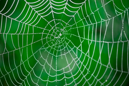 cobwebs: Morning dew  Shining water drops on spiderweb over green forest background  Hight contrast image  Shallow depth of field