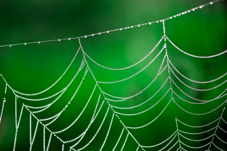Morning dew  Shining water drops on spiderweb over green forest background  Hight contrast image  Shallow depth of field photo