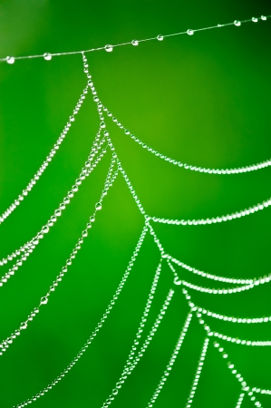 Morning dew  Shining water drops on spiderweb over green nature background  Shallow depth of field photo