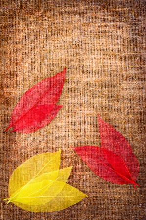 Grunge autumn background with dried leaves isolated on canvas photo