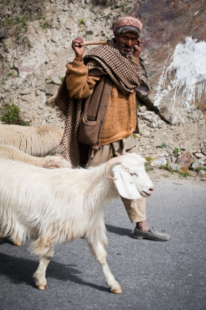 Himalayan shepherd from Lahoul Valley leads his goat and sheep flock. India, Himachal Pradesh, Lahoul Valley September5, 2012