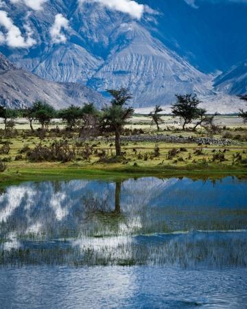 ladakh: Sunny day view with trees at Nubra Valley. Himalaya mountains landscape. India, Ladakh, altitude 3100 m