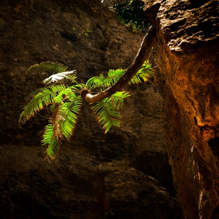 Palm tree growing on vertical wall inside cave of tropical rainforest photo