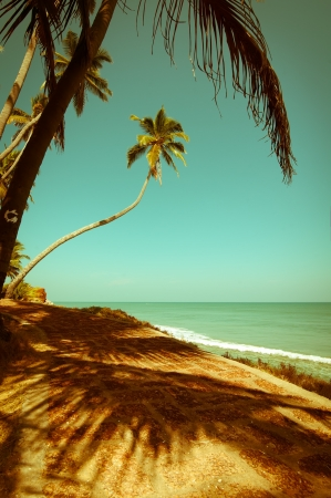 Beautiful sunny day at tropical beach with palm trees. Ocean landscape in vintage style. India photo