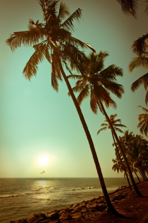 Beautiful sunset at tropical beach with palm trees. Ocean landscape in vintage style. India Zdjęcie Seryjne