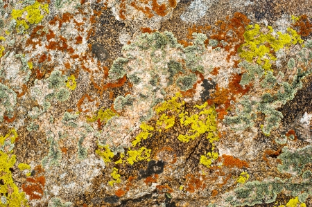 Nature colors background  Rock surface with lichen and moss texture photo