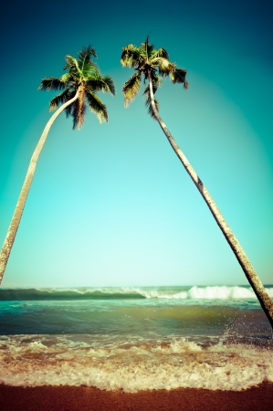 south beach: Beautiful tropical landscape with ocean beach and palm trees under blue sky. Image in vintage style. India