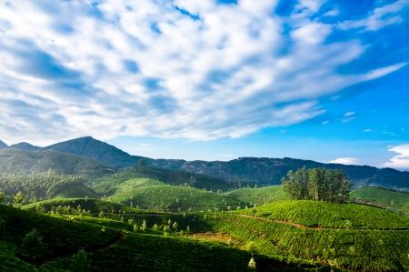 munnar: Morning at tea plantation landscape under blue cloudy sky. Munnar, Kerala, India Stock Photo