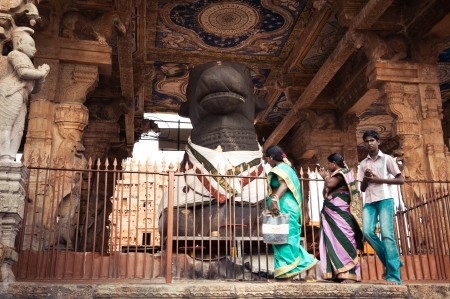 nandi: THANJAVUR, INDIA - FEBR 13  Indian people brings offerings to Holy Nandi Bull as Shiva personification in Hinduism at Brihadeeswarar Temple on February 13, 2012  India, Tamil Nadu, Thanjavur  Trichy