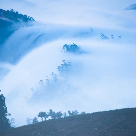 munnar: Morning mist at mountains and trees. Beautiful sunrise at tropical landscape with fog at tea plantation. Munnar, Kerala, India. Nature background