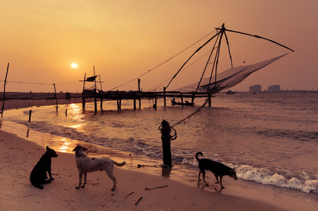 chinese fishing nets: Sunset at tropical beach. Abandoned dogs at ocean coast landscape with chinese fishing nets at Cochin (Kochi). South India, Kerala, Kochin