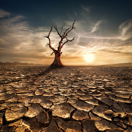 Global warming concept  Lonely dead tree under dramatic evening sunset sky at drought cracked desert landscape