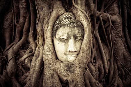 cabeza de buda: Cabeza de Buda escondido en las raíces del árbol escultura de piedra arenisca antigua en Wat Mahathat Ayutthaya, Tailandia Foto de archivo