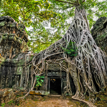 banyan tree: Ancient Khmer architecture. Ta Prohm temple with giant banyan tree at Angkor Wat complex, Siem Reap, Cambodia. Two images panorama