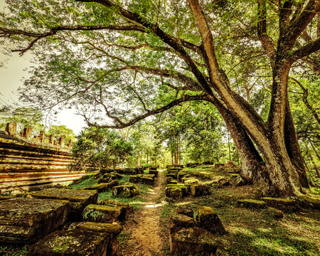 Outdoor park landscape in vintage style. Empty road going through ancient ruins of Angkor Wat complex at tropical forest. Siem Reap, Cambodia photo