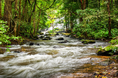 rain forest background: Tropical rainforest landscape with flowing river, rocks and jungle plants. Chiang Mai province, Thailand