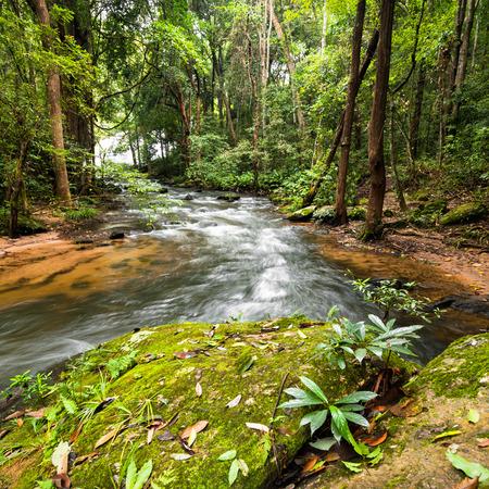 Paisaje selva tropical con el que fluyen los ríos, rocas y plantas de la selva. La provincia de Chiang Mai, Tailandia