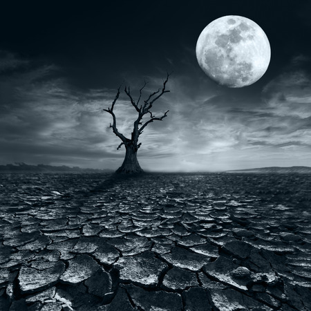 Einsam toter Baum bei Vollmond Nacht unter dramatischen bewölkten Himmel bei Trockenheit rissig Wüstenlandschaft