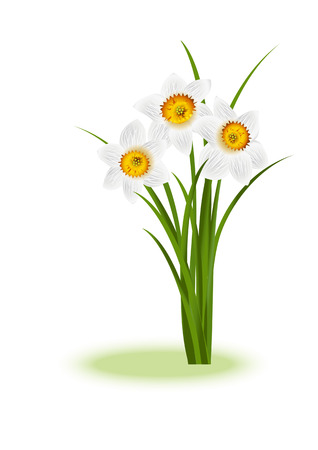 april: Spring Flowers. White narcissus on white background with space for your text. Vector illustration