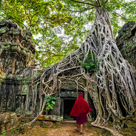 angkor thom: Buddhist monks at Angkor Wat  Ancient Khmer architecture, Ta Prohm temple ruins hidden in jungles  Popular travel destination at Siem Reap, Cambodia