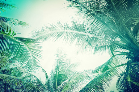 Abstract summer background in vintage style with tropical palm tree leaves at sunny day