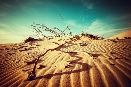 Desert landscape with dead plants in sand dunes under sunny sky Stock Photo