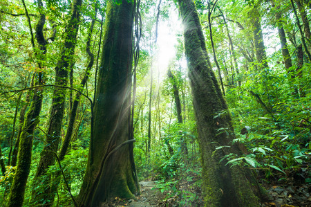rainforest background: Amazing morning at deep rainforest with tropical plants and sunbeams