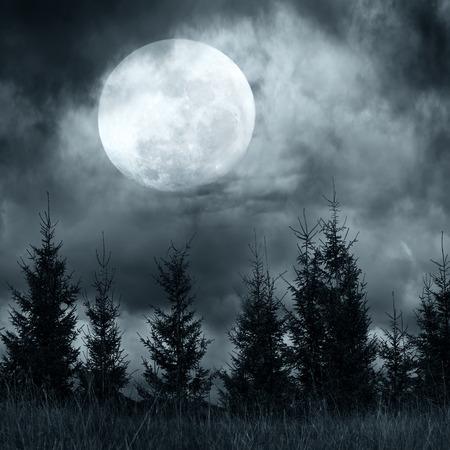 Magic landschap met dennenbos onder dramatische bewolkte hemel bij volle maan mysterieus nacht