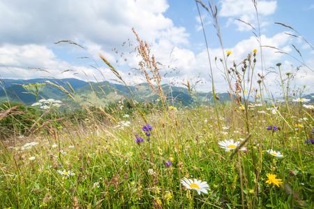 산 놀라운 화창한 날. 여름 푸른 하늘 아래 야생화 초원. 자연 배경과 풍경