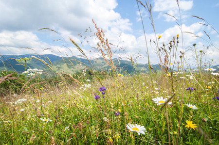 Amazing sunny day in mountains. Summer meadow with wildflowers under blue sky. Nature background and landscape Фото со стока