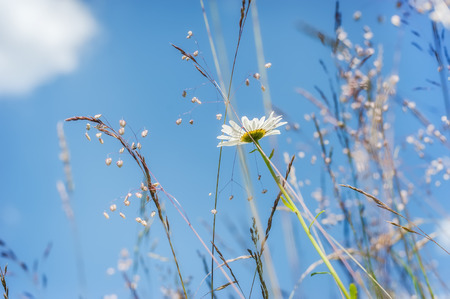 Amazing sunny day at summer meadow with wildflowers under blue sky. Nature floral background photo