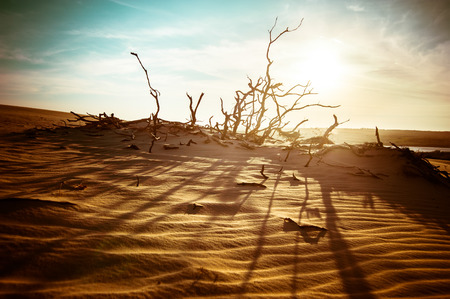 global warming: Desert landscape with dead plants in sand dunes under sunny sky. Global warming concept. Nature background