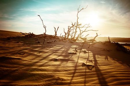 arboles secos: Paisaje del desierto con plantas muertas en las dunas de arena bajo el cielo soleado. Concepto de calentamiento global. La naturaleza de fondo