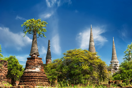 banyan tree: Asian religious architecture. Ancient ruins with growing trees under blue sky. Ayutthaya, Thailand travel landscape and destinations Stock Photo