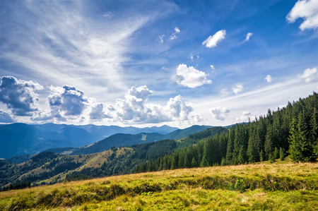 Amazing sunny landscape with pine tree highland forest at Carpathian mountains under blue sky. Ukraine destinations and travel background