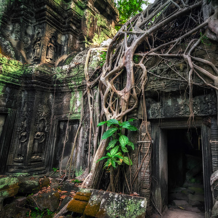 banyan tree: Ancient Khmer architecture. Ta Prohm temple with giant banyan tree at Angkor Wat complex, Siem Reap, Cambodia travel destinations Stock Photo