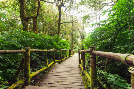 Jungle landscape. Wooden bridge at misty tropical rain forest. Travel background at Doi Inthanon Park, Thailand