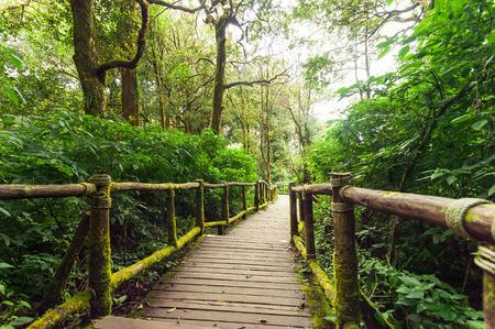 Jungle landscape. Wooden bridge at misty tropical rain forest. Travel background at Doi Inthanon Park, Thailand