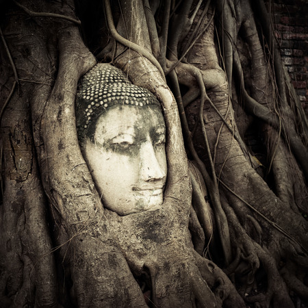 Buddha Head hidden in the tree roots. Ancient sandstone sculpture at Wat Mahathat. Ayutthaya, Thailand photo