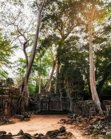 Ancient Khmer architecture. Ta Prohm temple with giant banyan tree at sunset. Angkor Wat complex, Siem Reap, Cambodia travel destinations photo