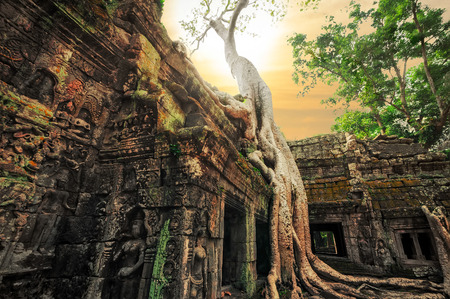 Ancient Khmer architecture. Ta Prohm temple with giant banyan tree at sunset. Angkor Wat complex, Siem Reap, Cambodia travel destinations