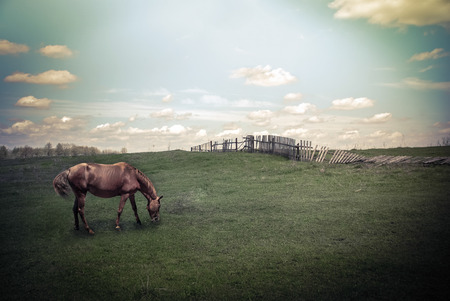 Sunny day in countryside. Summer landscape with horse at pasturage under blue cloudy sky. Nature background in vintage style photo