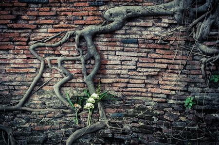 arbol raices: Pared de ladrillo antiguo, parte de las ruinas del templo budista con las raíces del árbol de higuera de crecimiento y flores de loto ramo Foto de archivo