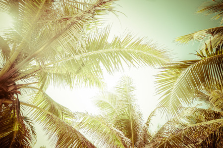 Abstract summer background in vintage style with tropical palm tree leaves at sunny day 版權商用圖片 - 32237182