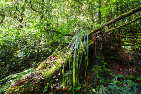 ferns and orchids: Wild tropical plant growing in deep mossy rain forest. Doi Inthanon park, Thailand nature background