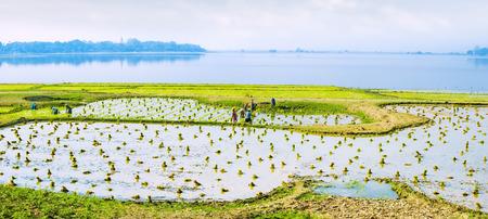Amazing panorama view of rice fields at Taung Tha Man lake, Amarapura, Mandalay region. Myanmar (Burma) travel landscape and destinations photo