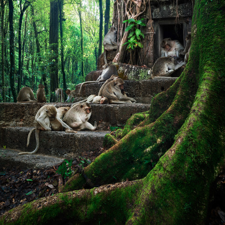 Monkeys relaxing at ancient temple ruins in tropical rainforest. Mysterious wildlife of amazing jungles